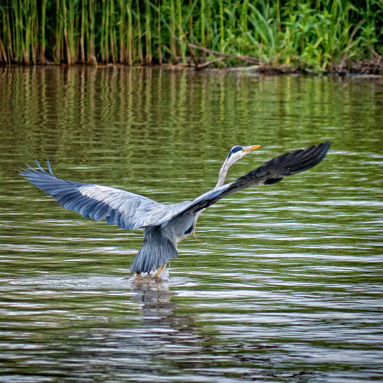 Barry spotted another heron opposite our overnight mooring