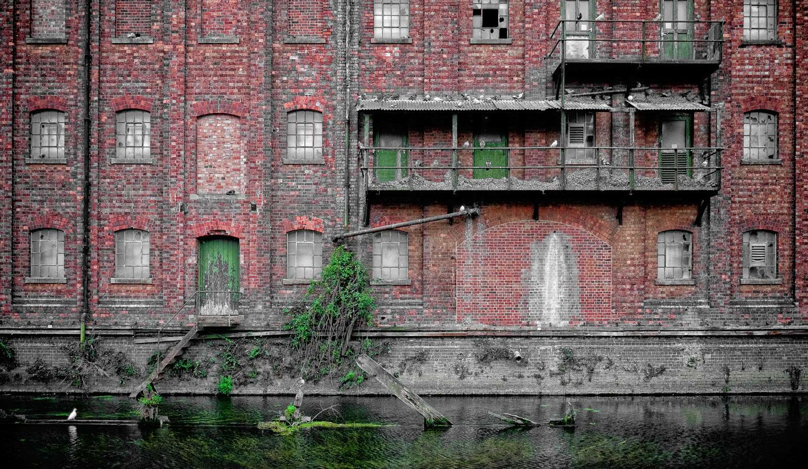 The old bread mill at Wellingborough on the River Nene, now inhabited by a million pigeons.
