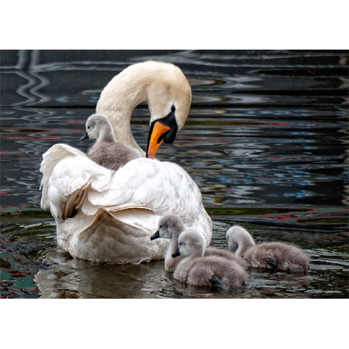Swan and her family