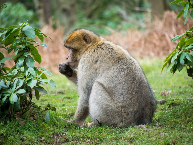 Trentham Monkey Forest