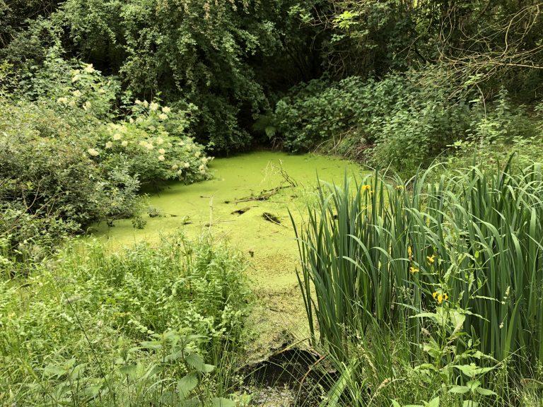 Pond in Dawsons Wood