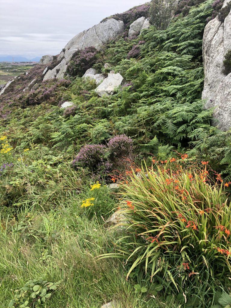 Holyhead Mountain July 2020
