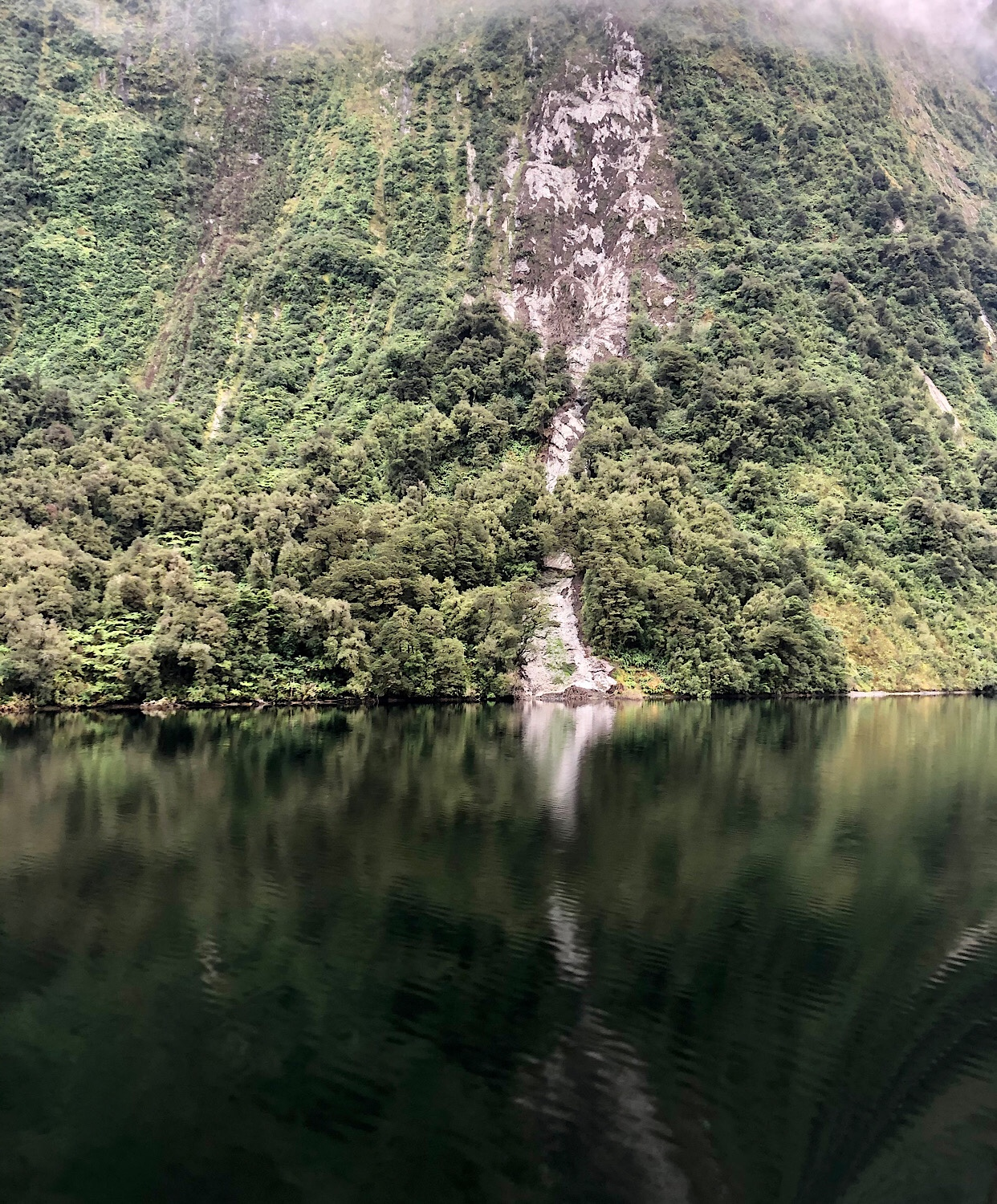 Tree avalanche scar at Doubtful Sound